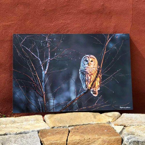 Barred Owl   Canvas by Benjamin Williamson Description