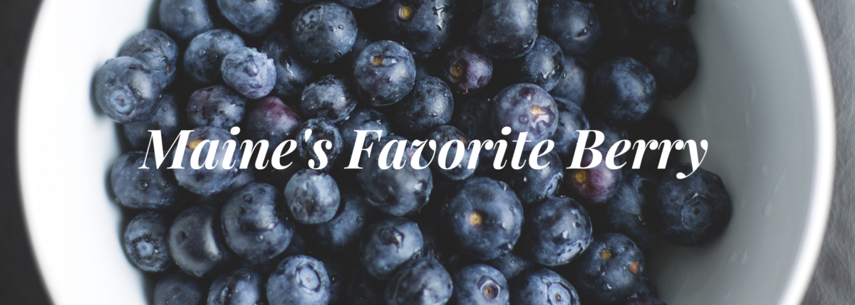 maine fave berry