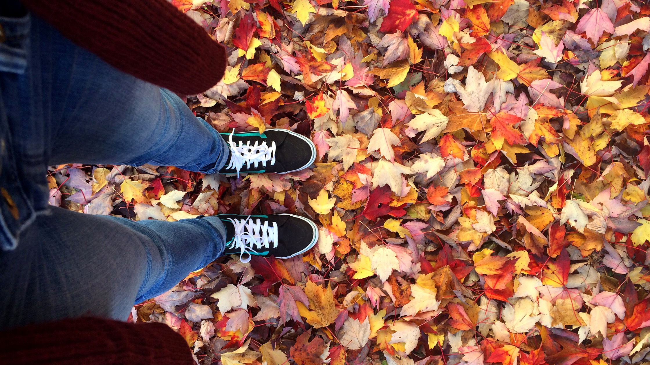 Maine Souvenirs: Autumn Edition